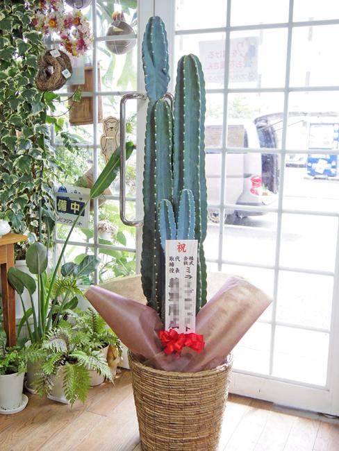 観葉植物 名古屋 事務所開き