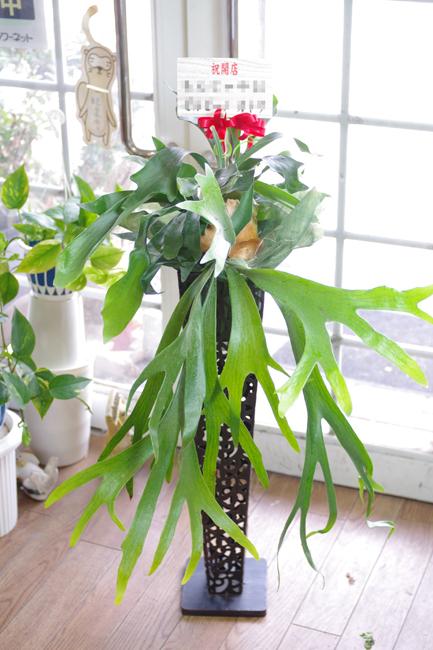 観葉植物-2